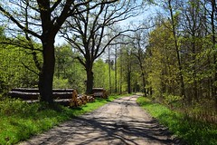 spring in the forest (JoannaRB2009) Tags: spring forest path road nature dirtroad tree trees oak oaks sunny sun light sunlight shadow green polska poland dolnyśląsk lowersilesia dolinabaryczy