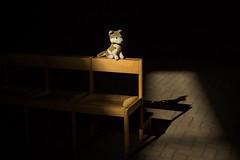 MEIN Schatten und I (WolfiWolf-presents-WolfiWolf) Tags: wolfiwolf wolfi wolf würzburg heilig lightshadow schatten lichtschatten light ibindaslicht chair stuhl alone augen blue blau blueeyes butlers conductor creator chef dirigent derprächtigste derschönste eneamaemü eyes farky feuer bank bench leben stüben strahlen huldvoll i intensiv jazzinbaggies kleinewolfis kunst lupuslupus multiversen marieschen nachmittag öhrchen ohrwascherl poem quanten quantensuppe rente swing tanz ufo versenkung meditation mental waiting x yellow jazz wolfismus erleuchtung federleicht tiefsinnig meditativ weisheit chooyu tiefsee wolke7 umananda recht siebentagehatdiewoch