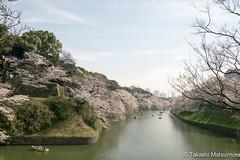 Chidorigafuchi (takashi_matsumura) Tags: chiyodaku tokyo japan nikon d5300 sakura cherry blossoms tōkyōto chidorigafuchi 千鳥ヶ淵 ngc afp dx nikkor 1020mm f4556g vr