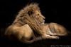 DSC_5662.jpg (yfan_ca) Tags: lions wild beast majesty
