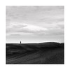 ~~~ | ~~~~~~~~~~~~~ (Nick green2012) Tags: blackandwhite minimal square tuscany lone tree fields silence
