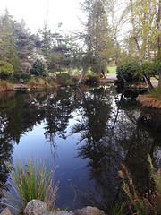 Pond reflection at Point Defiance park, cloudy day, spring, Tacoma, Washington, USA (Wonderlane) Tags: 20180406190348 pondreflectionatpointdefiancepark cloudyday spring tacoma washington usa pond reflection point defiance park