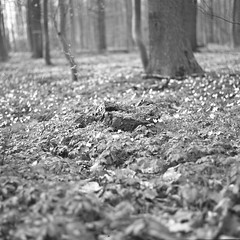 superikonta532006 (salparadise666) Tags: zeiss ikon super ikonta 53216 opton tessar 80mm fuji neopan acros vintage folding medium format analogue film camera nils volkmer 6x6 square bw black white monochrome landscape nature rural trees hannover region niedersachsen germany north german plains lowlands