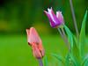 Flower #2 (Czayen) Tags: helios 442 582 macro flower dm