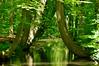 Twickelervaart (l-vandervegt) Tags: 2018 nikon d3200 nederland netherlands holland paysbas niederlande overijssel twente delden twickel natuur nature boom bomen tree trees groen green