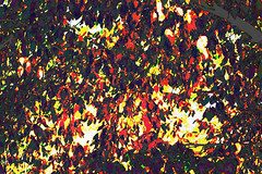 (psychedelic world) Tags: blätter leaves bunt colours colored äste zweige branches nature natur herbst autumn fall sonnenlicht sunlight red rot light licht hell bright psychedelisch psychedelic psychedelicworld forest wood wald bäume trees outdoor