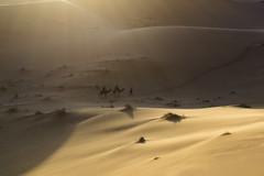 Dreaming with Sahara. (...in the woods...) Tags: sahara dessert desierto marruecos maroc morocco arena sands dunes dunas camellos camels nomads bereber trekking paisaje landscape africa