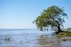 Solo en el río (Diego Kondratzky) Tags: magdalena buenosaires argentina ar árbol ríodelaplata río