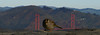 Looking at the View (charlottes flowers) Tags: twinpeaksview goldengatebridge composite
