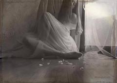 April Dreams ... (MargoLuc) Tags: spring dreams feeling romantic mood light window me self portrait girl woman monochrome white petals bw emotions artisawoman