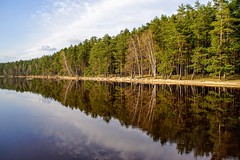 mirrorless (daimak) Tags: lake water reflection woods forest trees landscape sonyilce7 lithuania