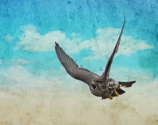 sparrow hawk huntin varmints