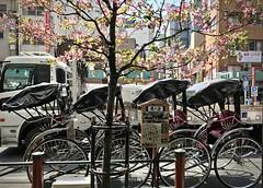 Tokyo street, spring (kimbar/Thanks for 4.5 million views!) Tags: tokyo japan street truck rickshaws pedicabs cherrytree shops