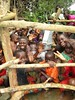 Kuliva thankful to God (2) (W4KI) Tags: w4ki borehole drill drilling cleanwater safewater restorehope hope