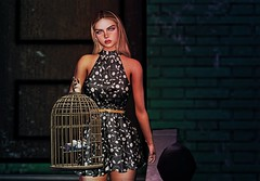 A golden cage is still just a cage... (catcatalina) Tags: birds cage deaddollz michan aviglam bloom theseasonstory ebento supernatural