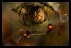 observation (pete ware) Tags: sporophytes macro treeknot silverbirch nikond7000 afnikkor50mmf18d photoshop composite eye watching capsules water peteware peterware kenkoextensiontubes