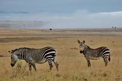 Dawn, above the clouds - Mountain Zebra N.P. (stevelamb007) Tags: mountainzebra mountainzebranationalpark southafrica africanwildlife africa stevelamb nikon landscape dawn clouds endangered