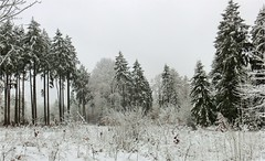 Spring Break (farmspeedracer) Tags: march snow cold germany landscape 2018 white tree forest nature morning sky