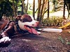 jacob (pantera photo) Tags: perros animales mascotas dogs