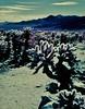 (the dick graysons) Tags: aerochrome kodakeir kodakaerochrome pentax67ii pentax infrared colourinfrared colorinfrared 120 mediumformat expiredfilm slidefilm e6 homedeveloped tetenal california ishootfilm filmisnotdead analoguephotography analogphotography 6x7
