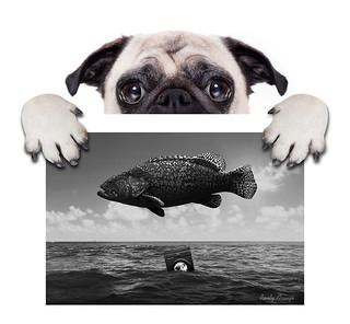 rePUG fish máquina cópia