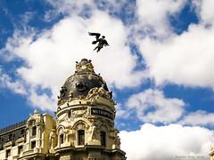 Flying over Metropolis / Volando sobre Metropolis (Ramon Oria) Tags: metropolis madrid victoria statue winger goddess diosa 1911 granvía gran via alcalá calle de victory alada metropolismadrid