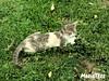 Descansando... (MariaTere-7) Tags: gato parquedelosgatos parquejohnfkennedy lima perú maríatere7