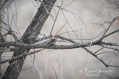 (bryce yamashita) Tags: belmar belmarpark colorado d850 lakewood nature nikon wildlife yamashita birds