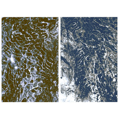 Day 27 of photomonthsac: water ripple diptych at Hidden Falls, part 1 (CapturedByBethann) Tags: photomonthsac diptych blackandwhite waterripples ripples hiddenfalls exploretocreate justgoshoot sacramentophotographer norcal norcalphotographer abstract