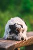 Dingo (romanhrbek) Tags: a6500 sony 85 mm dog dreamy jack russell terier dingo sweet animals bokeh