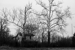 Hidden (dzmears) Tags: overgrown winter peaceful woods day overcast lost trees forgotten forest house old black pretty abandon blackandwhite quaint white