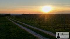 Sonnenuntergang bei der Weinwanderung Vinocamp Rheinhessen 2018