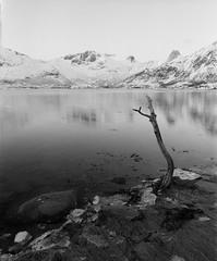 Vaterfjord (Marius Krane) Tags: 50mm mamiya vaterfjorden ilfotecddx hp5plus fremkalt65min rb67 ilford analog feilaktigeksponertsom100iso