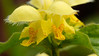365/254b (Stozzle) Tags: 365 lamium flower yellow