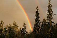 Rainbow in Everett WA, USA (Nick Dean1) Tags: rainbow colour color spectrum prism refraction refract everett washington