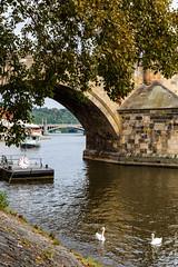 161011-121237-_L9A1061.jpg (andreydzagania) Tags: природа корабль чехия путешествия водоем пейзаж прага архитектура влтава отпуск река город