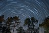 Enjoy The Ride (Douglas Heusser Photography) Tags: star trails long exposure photography night sky trail polaris north stars spin spinning earth universe milky way rokinon 14mm lens wide angle space canon heusser tripod apalachicola florida national forest panhandle camel lake fl hiking camping nature pines leaf
