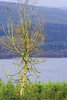 Prime Number (Gram Joel Davies (see ablums)) Tags: tree colour scotland scenery landscape view nature lake loch pine autumn