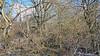 20180402_162940 (wos---art) Tags: bildschichten wald sträucher bäume äste fusweg wildwuchs natur natürlich gewachsen
