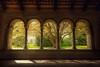 garden view (Chrisnaton) Tags: schaffhausen nature tree park archway light shadow allerheiligenschaffhausen