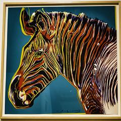 Warhol's Grevy's Zebra (Thad Zajdowicz) Tags: zajdowicz palmsprings california usa travel canon eos 5d3 5dmarkiii dslr digital lightroom availablelight ef24105mmf4lisusm screenprint art museum palmspringsartmuseum zebra grevys bright vivid vibrant indoor inside andywarhol endangeredspecies color red blue yellow colour