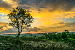 Alone Tree (Utkarsh 2016) Tags: nikond3300 nature natural landscape landscapelovers landscapephotography nikontop evening eveningsky beautiful beauty square flickr clouds cloudy cloudscape tree