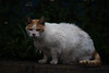 K_1_2896.jpg (akahigeg) Tags: 猫