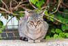Gata protegiendo a sus crías (CrisGlezForte) Tags: gata crías felinos naturaleza animales