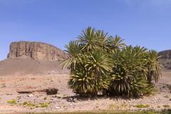 2018-4003 (storvandre) Tags: morocco marocco africa trip storvandre marrakech marrakesh valley landscape nature pass mountains atlas atlante berber ouarzazate desert kasbah ksar adobe pisé