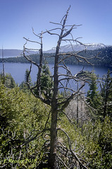 Trees Die Standing Up (Greatest Paka Photography) Tags: dead deadtree laketahoe emeraldbay california decomposition death ecosystem