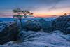 Lehnriff Kiefer (D a v i d _ M) Tags: lehnriffkiefer sunset sonnenuntergang sonya7ii sigma24mmf14art sächsischeschweiz saxonswitzerland elbsandsteingebirge erkunden explore tree stein stone wolken clouds landscape landschaft countryside