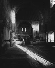 Burchardikloster (Sciurus vulgaris) Tags: halberstadt harz burchardikloster johncageorgelstiftung harzvorland sakrales