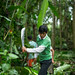 Migration and Forests Project, Peru