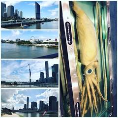#brisbane #museum #giantsquid #squid #walk #sightseeing #city #sunnyday #thursday #autumn  toowoomba-lawyer.com  #litigationlawyer #disputeslawyer #webdesigner (thomaslawyerqld) Tags: brisbane museum giantsquid squid walk sightseeing city sunnyday thursday autumn litigationlawyer disputeslawyer webdesigner